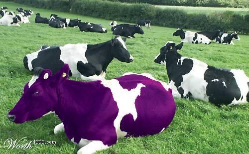 ¿Es tu Producto o Servicio una Vaca Púrpura?